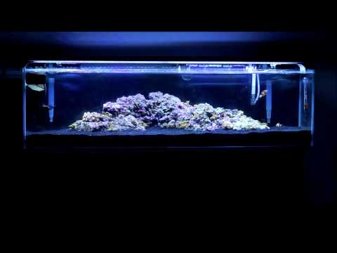 12 Gallon Mr. Aqua Reef Tank - Week 2