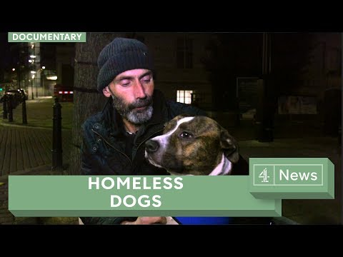 Dogs on the streets: how four-legged friends help the homeless
