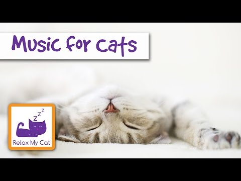 Music for Cats - Relaxing, Soothing Sounds to Help with Stressed Cats - IT WORKS!