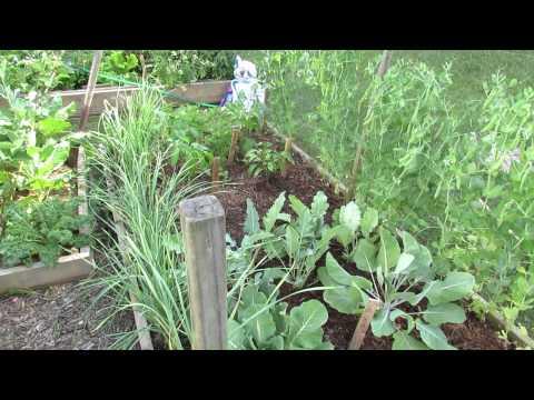 MFG 2015: Basics About Garden Mulching for New Gardeners - Moisture, Splash & Weeds