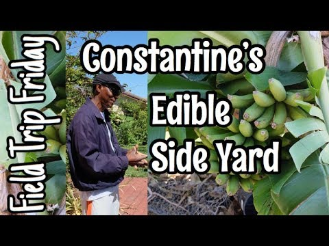 Field Trip Friday  Constantine's Edible Side Yard
