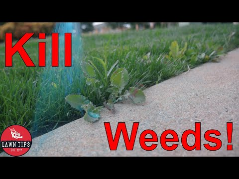 How To Kill Weeds In Your Lawn | Spot Spraying