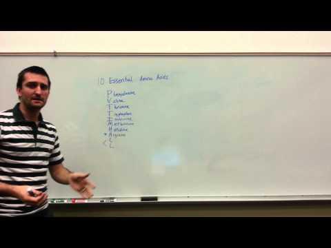 Essential Amino Acid basics