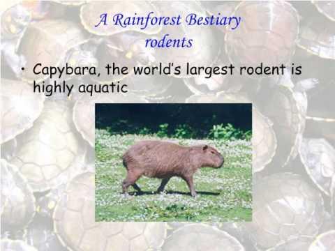 A Rainforest Bestiary