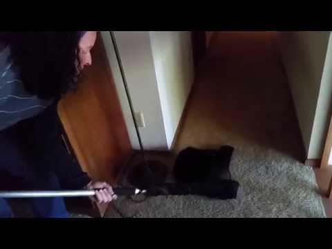 Netting a FERAL cat in a house
