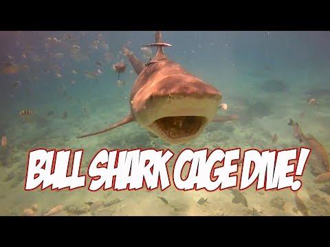 Cage Dive with Feeding Bull Sharks at Big Game Club Bimini Bahamas!