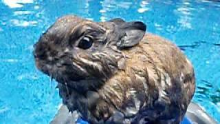 Brownie The Swimming Bunny (Read description!)