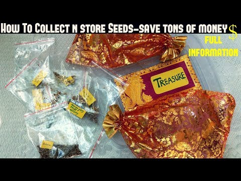 How To Collect And Store Seeds-Gardening Hacks