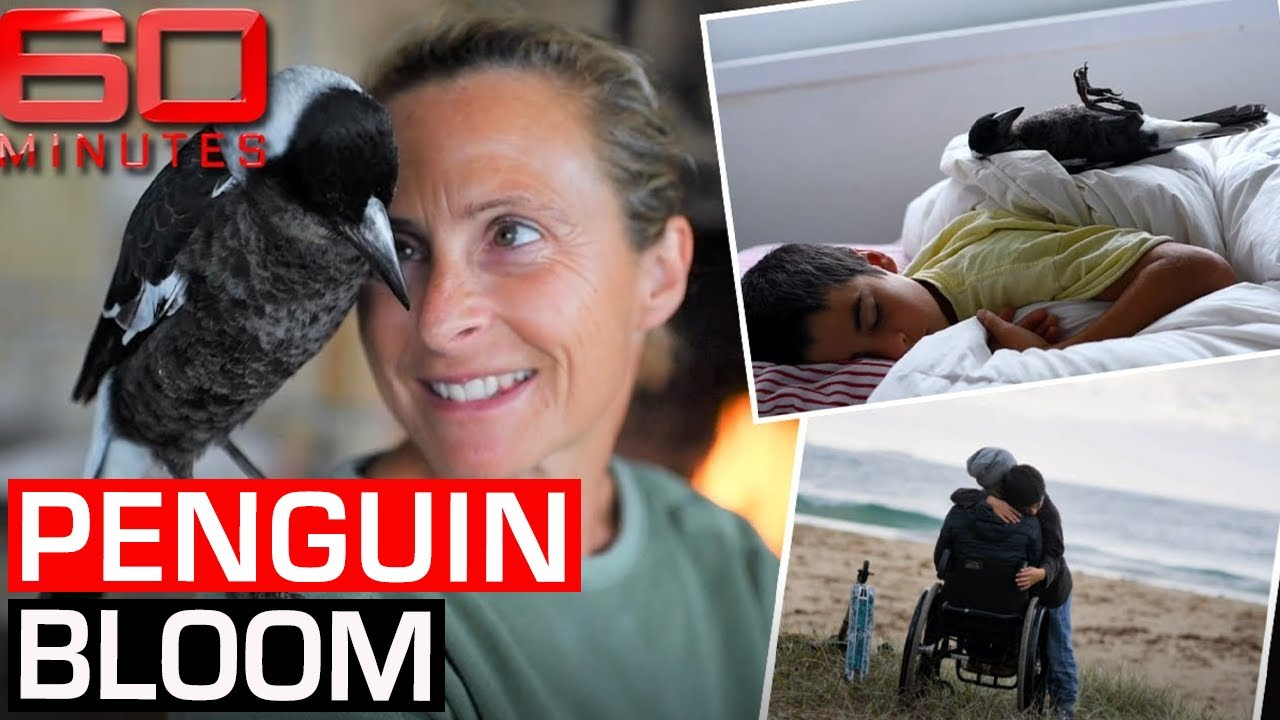 The incredible story of how a Magpie named Penguin saved a family | 60 Minutes Australia