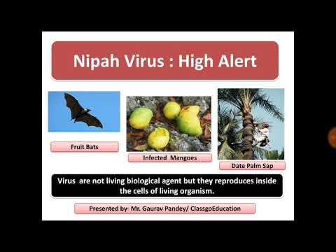 Nepah Virus- High Alert - Avoid these Infected Fruits