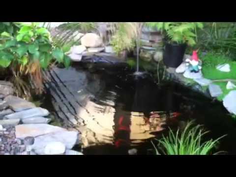 1000 dollar complete goldfish pond