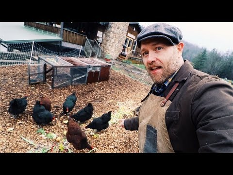 How I feed SIX Chickens for FREE