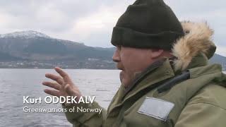 Farmed Norwegian Salmon  World's Most Toxic Food