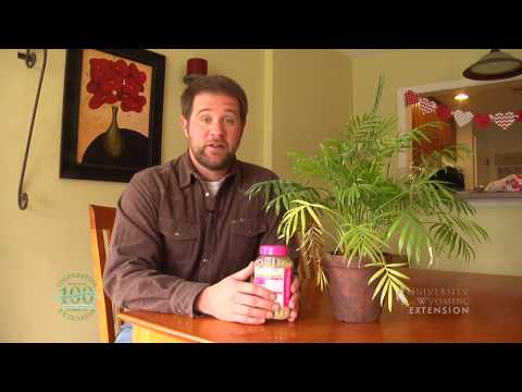 Fertilizing Tips for House Plants | From the Ground Up