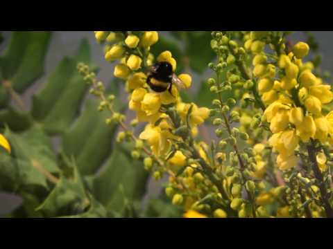 How to save bees and pollinators