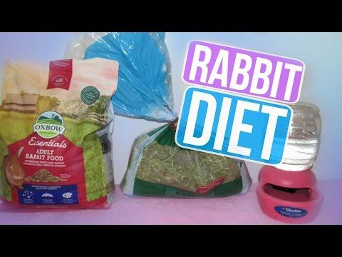 Adult Rabbit Diet   LovableLop