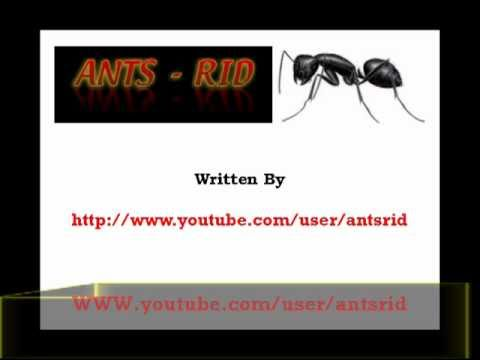 how to get rid of black ants in the house kitchen and garden