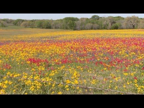 Plant wildflower seeds |Jeff Ferris |Central Texas Gardener