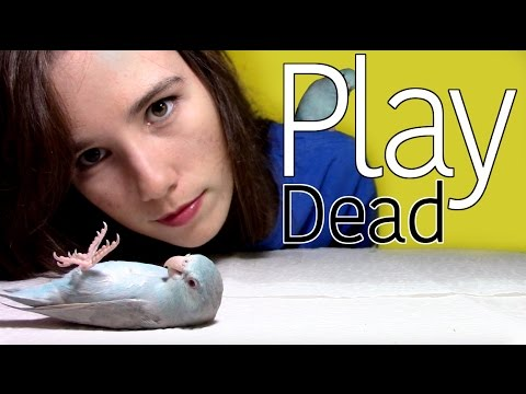 Training Tutorial | Play Dead