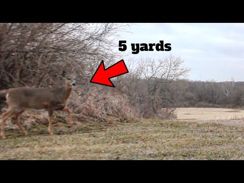 Bow Hunting Whitetail Deer: Late Season Kill Shot