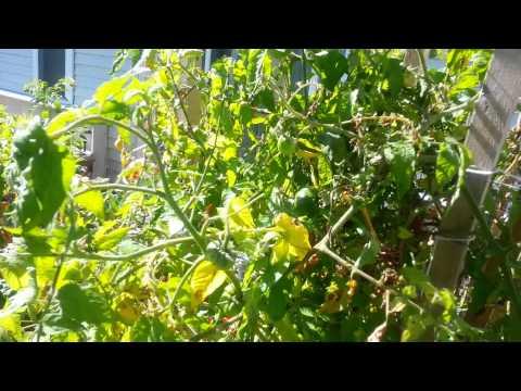 Garden tower, organic and self watering garden