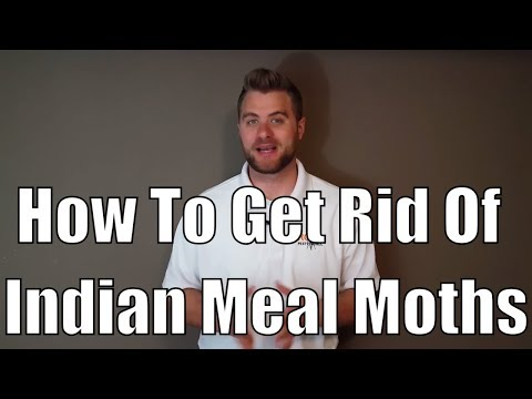How to get rid of Indian meal moths and product review of pt 565 plus xlo