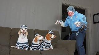 Dogs Arrested by Shark Cop Prank: Funny Dogs Maymo, Penny & Potpie