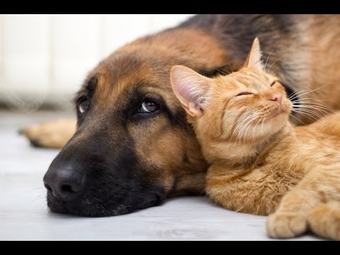 Wonderful Cats and dogs loving each other
