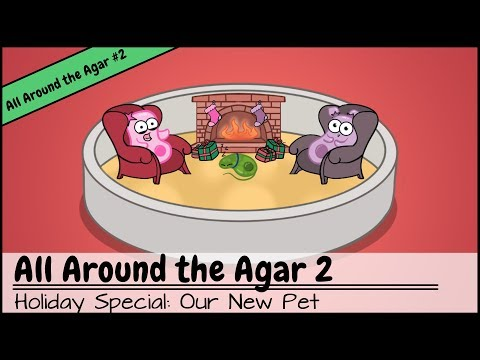Amoeba Sisters' Our New Pet and Holiday Special