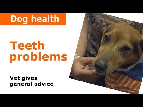 Dog teeth problems - Vet Advice