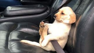 FORGET ALL WORLD PROBLEMS with these FUNNY DOGS