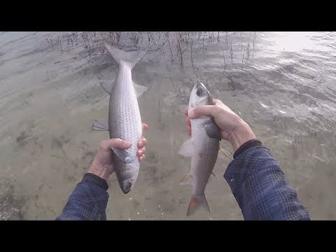 Big Winter Mullet and Sea Trout