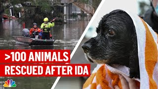Over 100 Animals Arrive in NY \u0026 NJ Shelters After Hurricane Ida: Here's How to Help | NBC New York