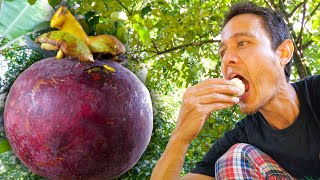 How To Eat MANGOSTEEN!! Harvesting + Cooking Mangosteen Curry! | Fruit Paradise in Thailand!