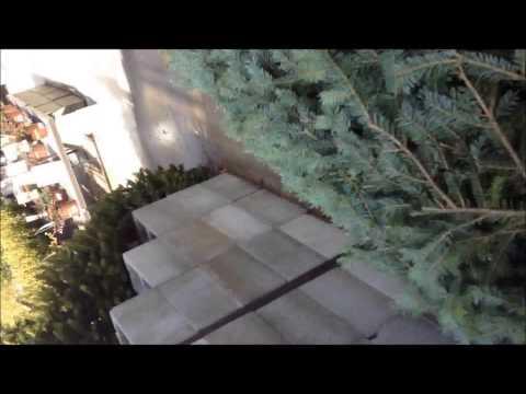How the Grinch Stole my Xmas Tree!