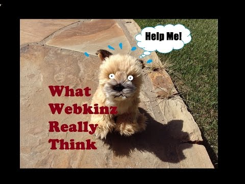 What Webkinz Really Think...