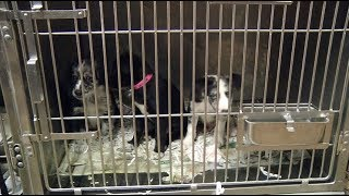 Dogs rescued from unsanitary conditions ready for adoption