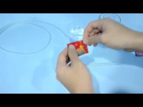 How to hatch baby brine shrimp eggs