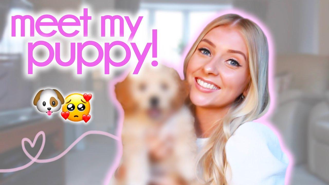 I GOT A PUPPY! 🐶 bringing home my cavapoo...