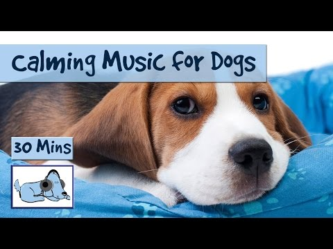 Keep Your Dog calm With Relaxation Music from Relax My Dog!