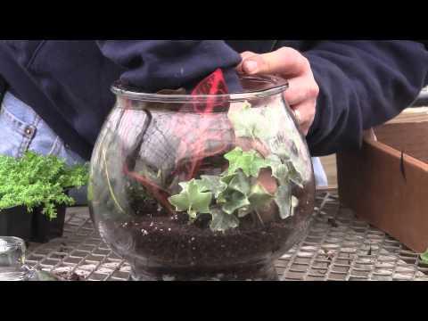 How to Plant a Glass Jar Terrarium