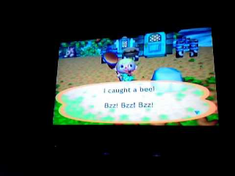Animal Crossing CF how to catch a Bee