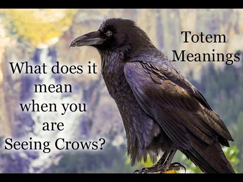 The Meaning of Seeing Crows: Animal Totems