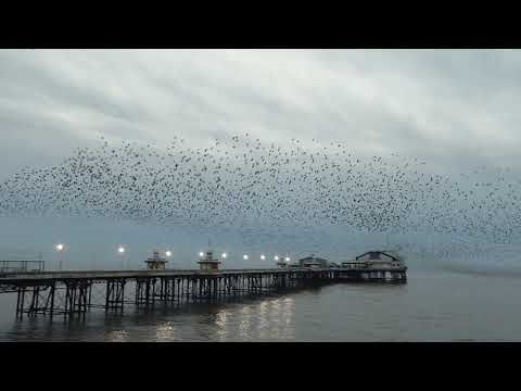 Starlings dancing in the sky over the North Pier Blackpool 26 January 2018