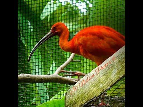 Caroni Bird Sanctuary Trinidad