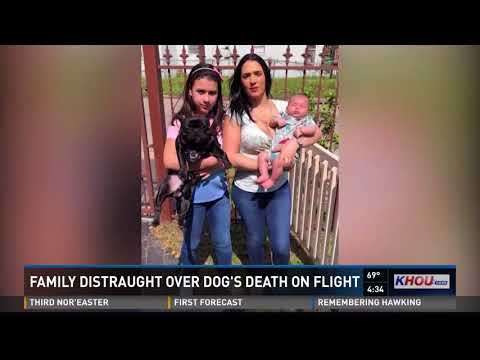 Family distraught over dog's death on flight