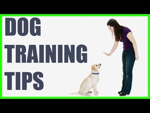 How to stop a puppy from barking for attention - puppy attention seeking