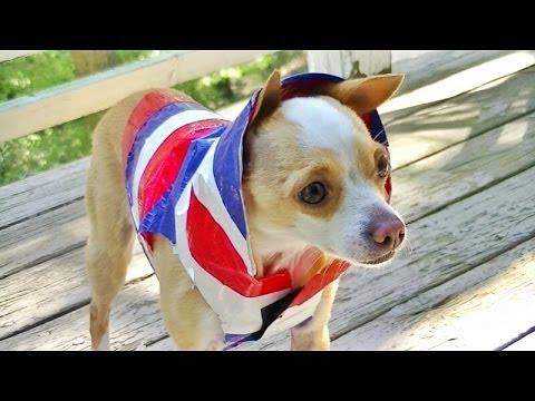 Diy Duct Tape Dog Jacket