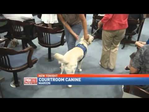 Man's Best Friend Comforts in Courtroom