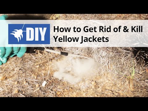 How to Get Rid of & Kill Yellow Jackets  - Nest Removal